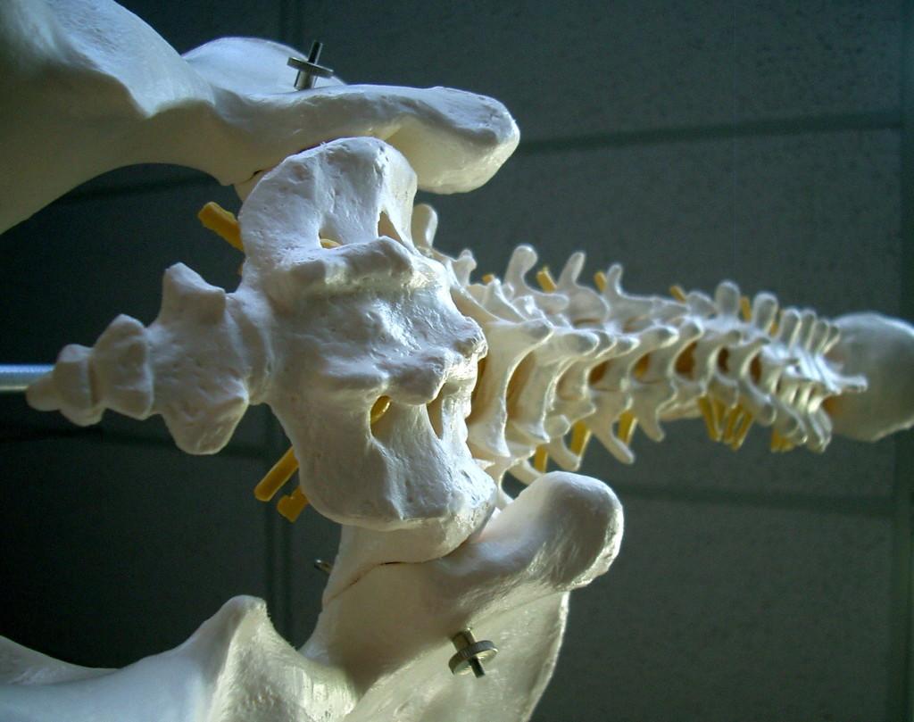 spine hip